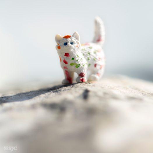 Riley's Cat