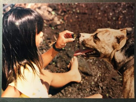 Classic Knight vs. Pit Bull, 1988? Photo by Andres Gaoiran Jr. (my father)