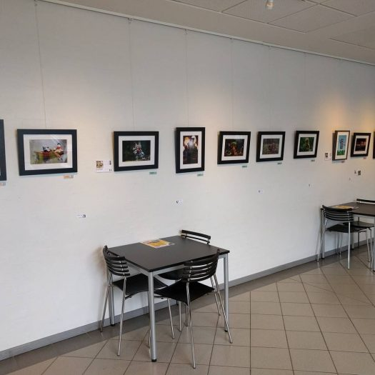 Our little picture exhibition